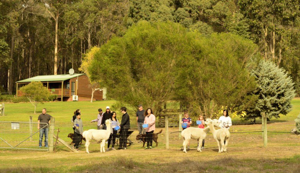 Farmstay Daily Animal Feeding