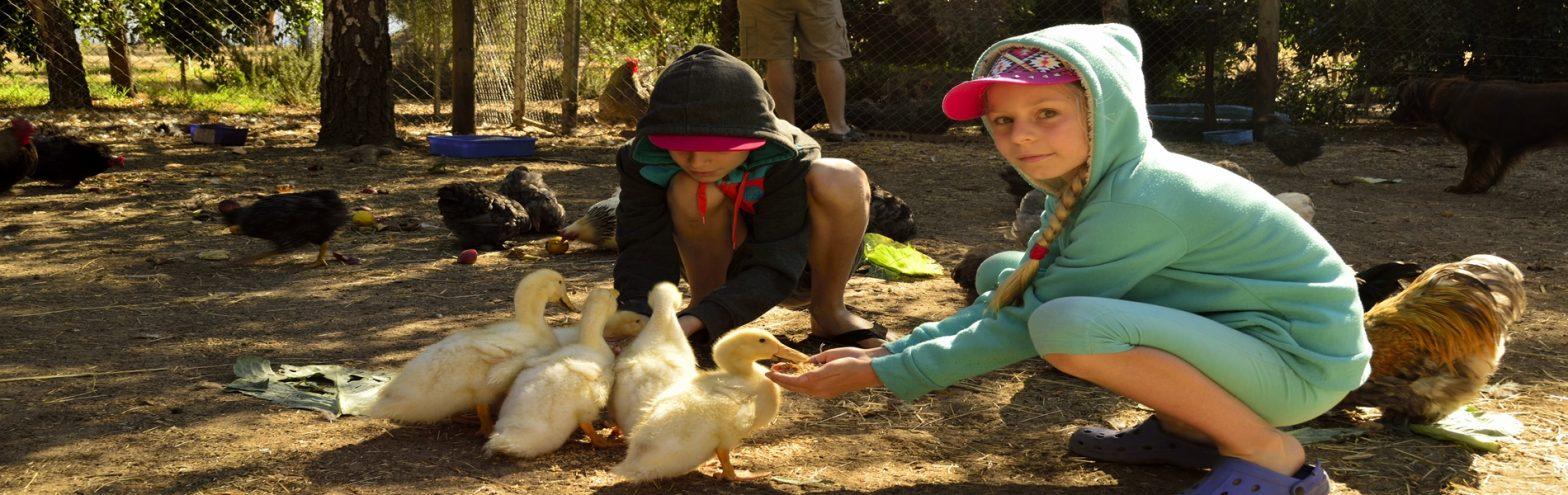 Farm Stay Fun for kids