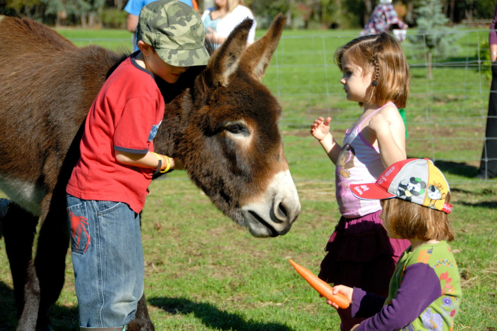 Farm Activities for Kids feeding the donkey