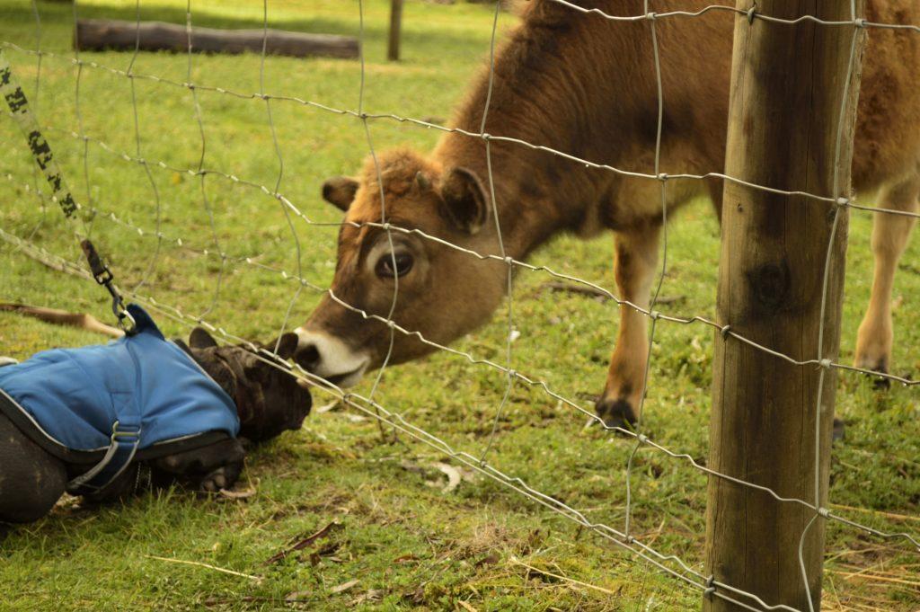 Pet Friendly Accommodation Dogs on Holidays