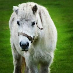 Farmstay pony