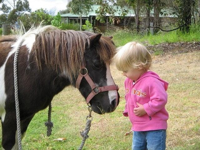 Farm stay pony