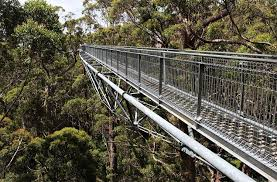 Manjimup Accommodation Valley of the Giants Tree Top Walk